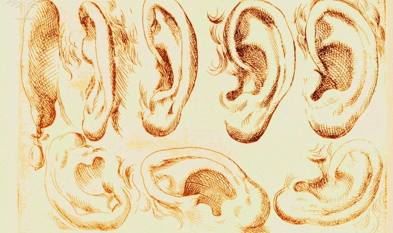 Odoardo Fialetti: Human Ears (1608). MEHAU KULYK / SCIENCE PHOTO LIBRARY / Universal Images Group Rights Managed.
