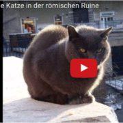 Literaturprojekt im Fach Deutsch Literatur der Kaufmännischen Schulen der Stadt Fulda