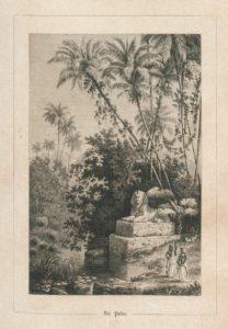 palme_digitalisieresammlung_sbb_naturstudien_1863